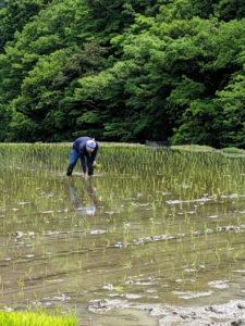 小森のツキノシタで農業体験