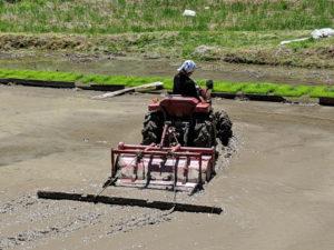 小森のツキノシタで農業体験、トラクター