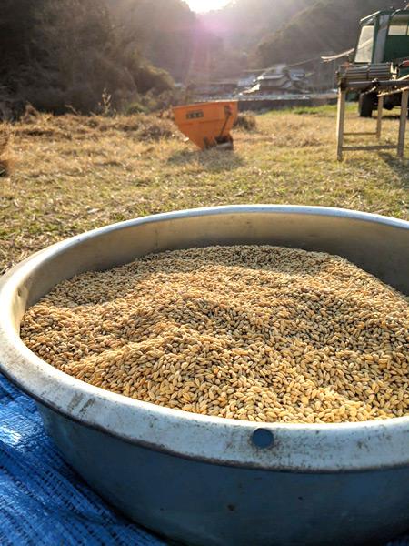 小森のツキノシタのお米収穫風景