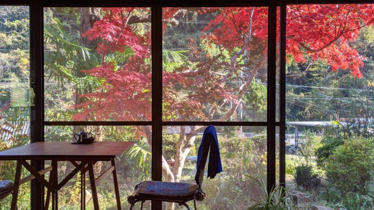 紅葉のシーズン到来🍁