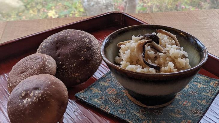 原木椎茸、収穫中!
